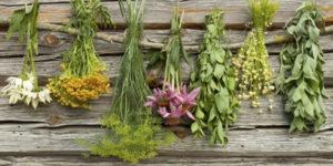 10 piante ed erbe che curano ansia, stress e depressione