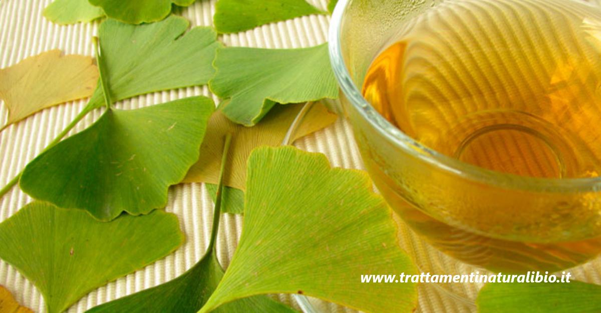 Ginkgo biloba: la pianta che allevia bronchite e infiammazioni. Ecco come