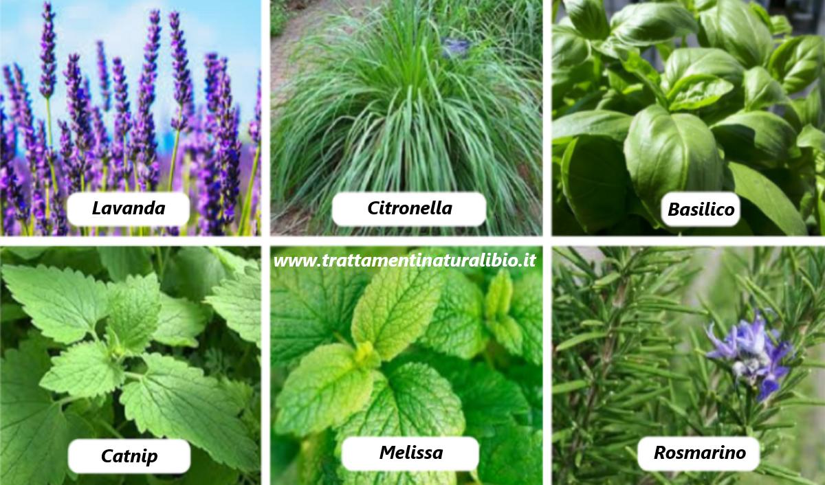 6 piante che allontanano zanzare e mosche