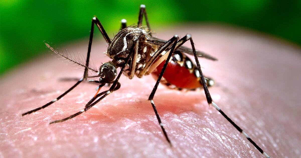 Zanzara Coreana: Allarme anche in Italia «Pericolosa per uomini e animali»