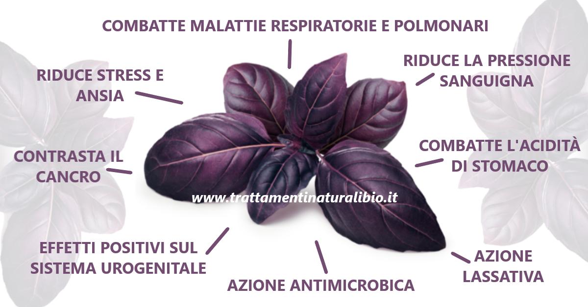 Proprietà Benefiche del Basilico Viola