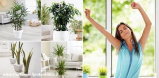 Come purificare l'aria di casa in modo naturale per respirare aria pura già da subito
