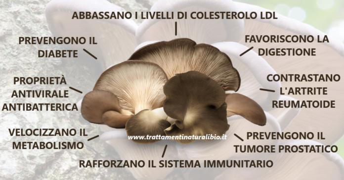 Proprietà e benefici dei funghi pleurotus