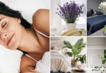 10 piante da camera da letto che purificano l'aria e ti faranno dormire meglio