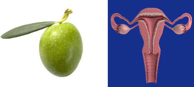 13 alimenti che assomigliano incredibilmente agli organi che curano